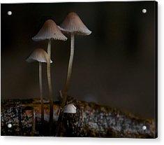 In The Dark Acrylic Print by Odd Jeppesen