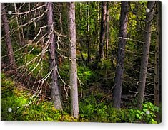 In The Depth Of Northern Forest Acrylic Print by Jenny Rainbow