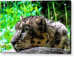 In The Eye Of A Leopard Acrylic Print by Glenn Feron