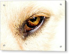 Acrylic Print featuring the photograph In The Eyes.... by Rod Wiens