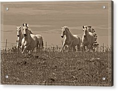 Acrylic Print featuring the photograph In The Field D5959 by Wes and Dotty Weber