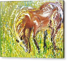 In The Field Acrylic Print