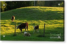 In The Field Acrylic Print by Randi Shenkman