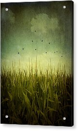 In The Field Acrylic Print by Trish Mistric