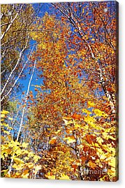 In The Forest At Fall Acrylic Print