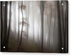 In The Forest..... Acrylic Print