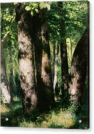 In The Forest Of Fontainebleau Acrylic Print by Pierre Auguste Renoir