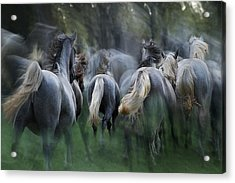 In The Gallop Acrylic Print