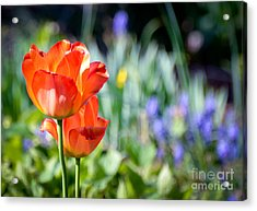 In The Garden Acrylic Print by Kerri Farley