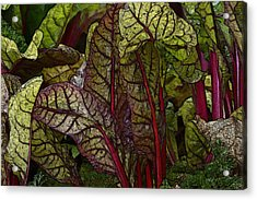 In The Garden - Red Chard Jungle Acrylic Print