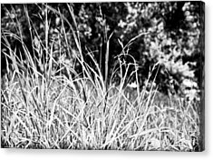 In The Grass Acrylic Print by Andrew Raby