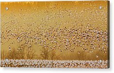 In The Magic Golden Would Acrylic Print
