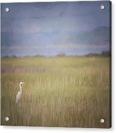In The Marsh  Acrylic Print by Kerri Farley