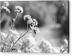 In The Meadow Acrylic Print by Barbara Bardzik