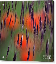 In The Meadow Acrylic Print by Heiko Koehrer-Wagner