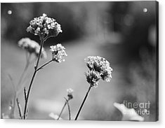 In The Meadow II Acrylic Print by Barbara Bardzik