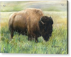 In The Meadow Acrylic Print by Karen Cade