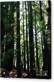 In The Midst Of Giants Acrylic Print by Michelle Bentham