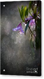 In The Morning Rain Acrylic Print