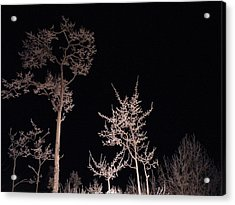 Acrylic Print featuring the photograph In The Night Garden by Brian Boyle