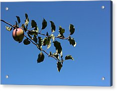 In The Orchard Acrylic Print by Mary Bedy