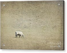 In The Pasture Acrylic Print by Elena Nosyreva