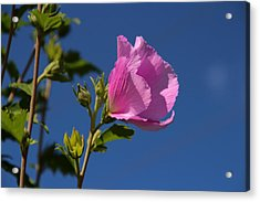 In The Pink Acrylic Print by Christine Nunes