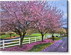 In The Pink Acrylic Print by Debra and Dave Vanderlaan
