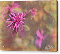 In The Pink Acrylic Print by Judi Bagwell
