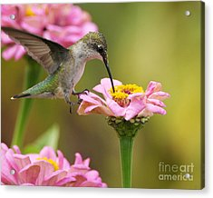 Acrylic Print featuring the photograph In The Pink by Olivia Hardwicke