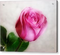 In The Pink Acrylic Print by Sandy Keeton