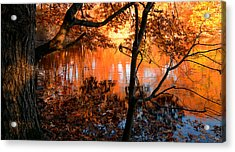 In The Pond Acrylic Print by Lourry Legarde
