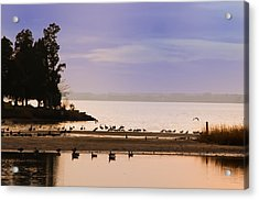 In The Quiet Morning Acrylic Print by Bill Cannon