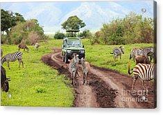 In The Safari Acrylic Print by Boon Mee