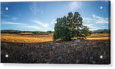 In The Shade Of An Oak Acrylic Print