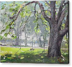 In The Shade Of The Big Tree Acrylic Print by Ylli Haruni