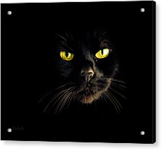 In The Shadows One Black Cat Acrylic Print by Bob Orsillo
