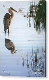 In The Shallows Acrylic Print by Deb LaFogg-Docherty
