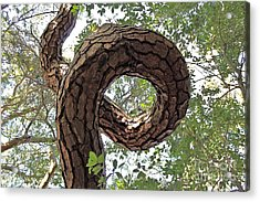 In The Spiral Of Life Always Reach For The Sky Acrylic Print by Kenny Sampson