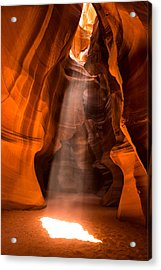 Acrylic Print featuring the photograph In The Spotlight by Brad Brizek