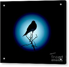 In The Spotlight Acrylic Print by Timothy Clinch