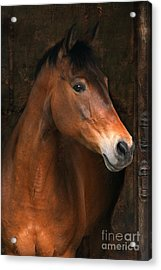 In The Stable Acrylic Print by Angel  Tarantella