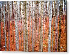 In The Sticks Acrylic Print by April Reppucci
