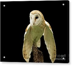 In The Still Of Night Barn Owl Acrylic Print by Inspired Nature Photography Fine Art Photography