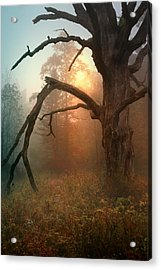 In The Stillness Acrylic Print