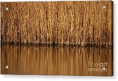 In The Weeds Acrylic Print
