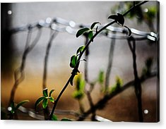 Acrylic Print featuring the photograph In The Wire  by Jessica Shelton