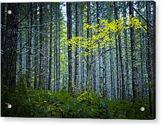In The Woods Acrylic Print by Belinda Greb