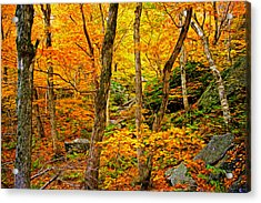 Acrylic Print featuring the photograph In The Woods by Bill Howard