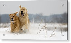In Their Element Acrylic Print